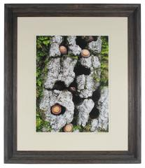 """""""Blue Oak Bark, Moss and Acorns"""" Mendocino, CA"""