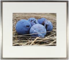 """""""Blue Damsons"""" Mendocino, CA"""