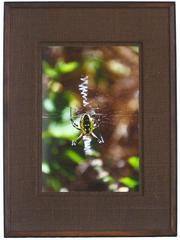 """Garden Spider"" Mendocino, CA"