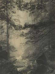 Hazy Forest Creek Black and White Photograph, Circa 1920s