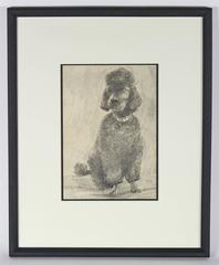Portrait of a Black Poodle in Charcoal, 1968