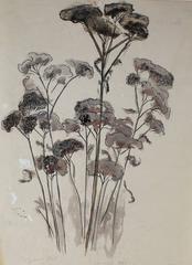 """Mendocino Plant"""