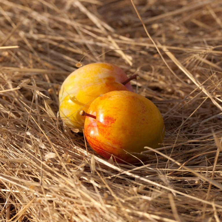 """""""Flavor Grenade Duo"""" (Pluots), Twin Plum-Apricot Still Life on Straw, (Framed)"""