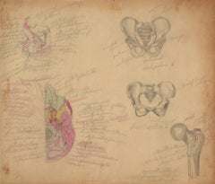 Anatomical Diagram of the Pelvis, Colored Pencil, 1930s