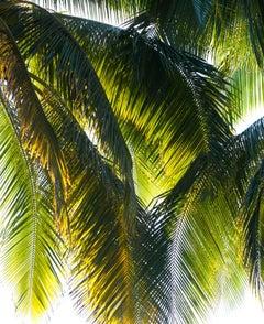 """Parasol"" Puna Peninsula, Hawai'i Photograph, 2107"