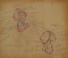 Anatomical Diagram in Colored Pencil, 1930s