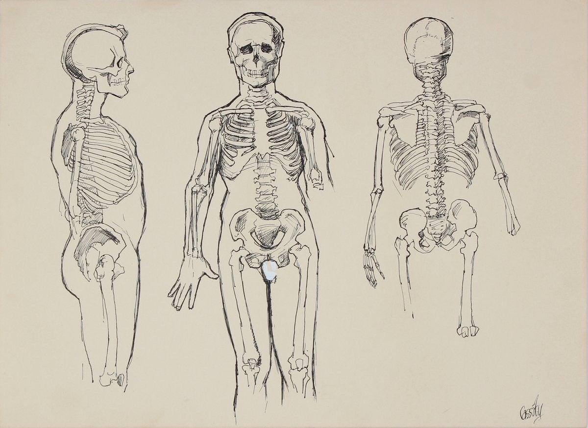 Anatomical Skeleton Study 1950s Ink