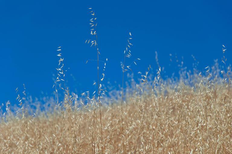 """""""Golden Mendocino"""" California Landscape Photograph, 2012"""