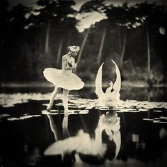 Alex Timmermans | Swan Lake (2015)