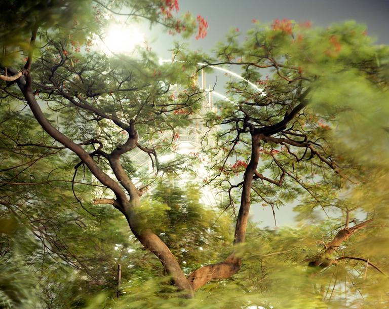 Peter Bialobrzeski Color Photograph - Paradise Now #32