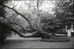 Jardin du Luxembourg, 1997
