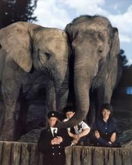 Elephant Keepers with Katie & Kumara, Whipsnade Park Zoo, UK