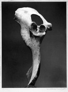Bone and Sky