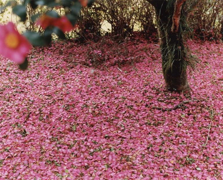 Yoko Ikeda Color Photograph - Misato Town, Kumamoto Prefecture (0883-10)