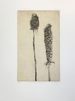 Calissouriettes Bouclotees  (from imaginary botanical series)