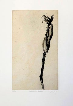 Senilophite Radoteur  (from imaginary botanical series)