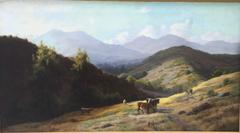 Cattle Grazing in the Hills, Marin County, California