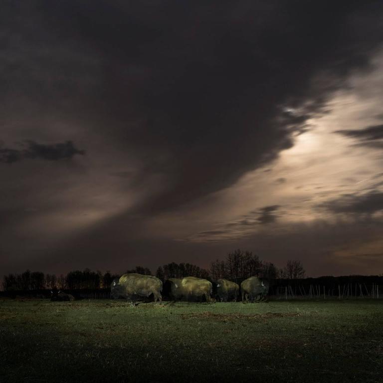 Kevin Boyle - Buffalo Under Moonlight 1