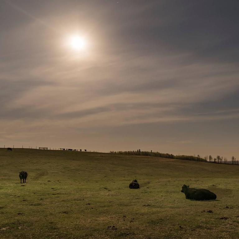 Kevin Boyle - Calving Cows Under Moonlight 1