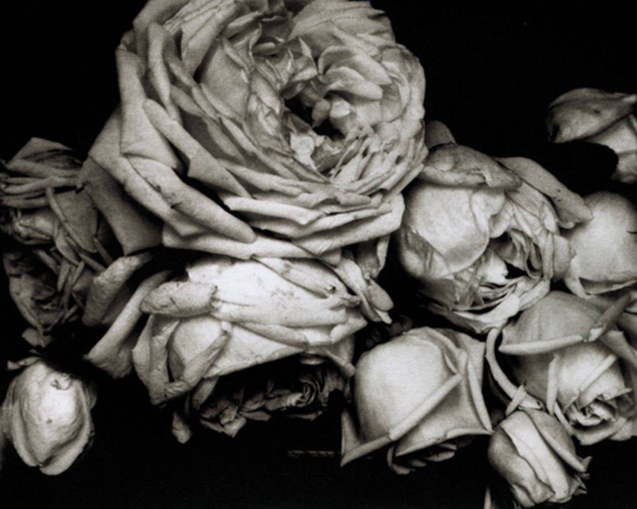 Edward Steichen Black and White Photograph - Heavy Roses