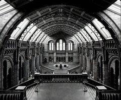 Natural History Museum, Londra, 2005