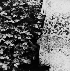 Gerlinde Miesenböck - Finding Home (Garden) - Triptych