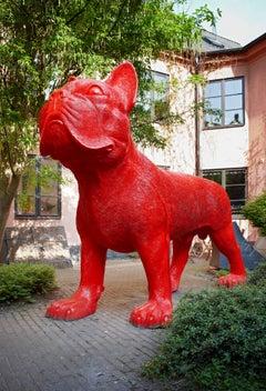 Big red cloned French Bulldog