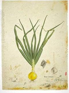 Growing an Onion
