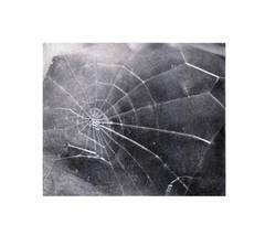 SPIDER WEB, Vija Celmins, 2009, screen print, signed and numbered, Ed. of 117