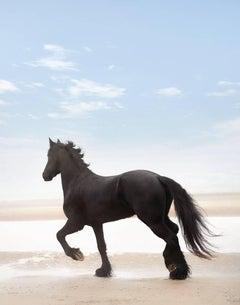 Black Horse on the Beach