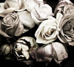 Still Life (Roses)