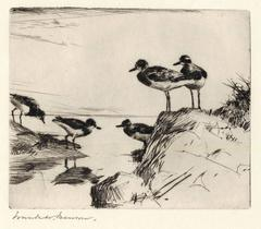 Study of Turnstones.