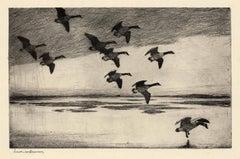 Geese Drifting Down.