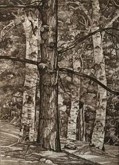 Tree Portraits.