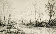 Le bouleaux: bord de l'eau, effect du matin.