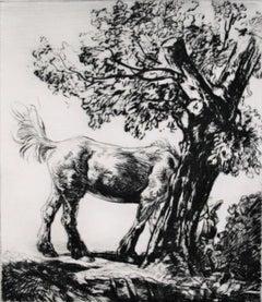 The Old Farm Horse.