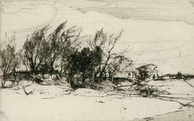 [Trees, Hayling Island, Hampshire, England]