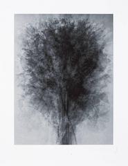 Idris Khan - After... Karl Blossfeldt Art Forms in Nature