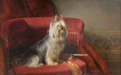 Mi-Mi, Portrait of a Yorkie