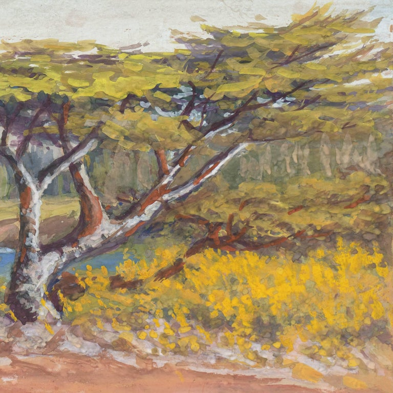 A cabinet-sized gouache painting showing a view of cypresses overlooking the coast near Carmel, California.  Signed lower left 'Curtis' for Alice Hunt Curtis (American, 1858-1957), painted circa 1915 and with artist information and title on old