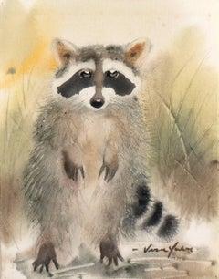 'Raccoon Cub', Nature, wild animal