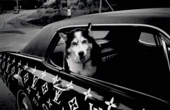 Louis Vuitton Dog