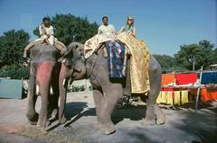 Tiger Morse Rides an Elephant, Benares, 1962
