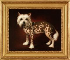 Chinese Crested, 1990
