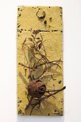 Joe Walters - Still Life with Hornet Nest