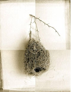Weaver Bird Nest from India