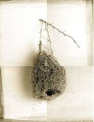 Weaver Bird Nest from India