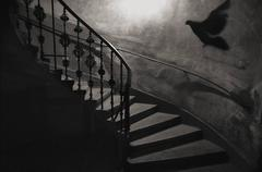 George Simhoni - Staircase Bird