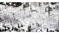 Eska White Forest