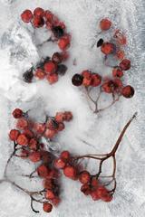 Winter Garden - Berries